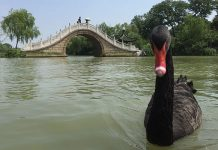 Yangzhou Slender West Lake