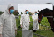 China race horses